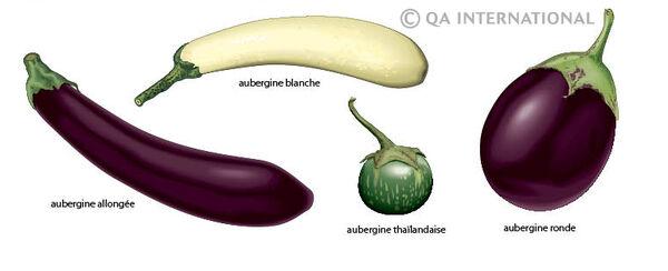 Differentes varietes aubergines