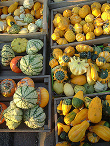 220px-Petites courges