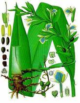 Medecine-douce-remedes-naturels-plantes-cardamome