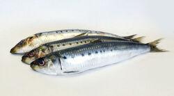 Sardines4
