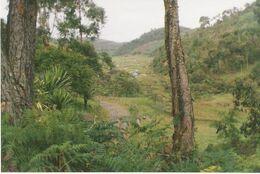 Bosque andino colombiano antioquia