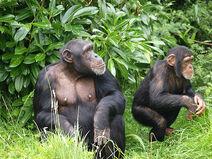 Cheser Zoo, England