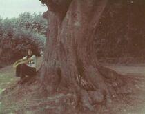 Treebh1