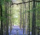 Trees, woodland and forest UK