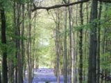 Biodiversity UK resources