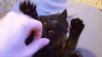 Black Cat Stick 'Em Up!!
