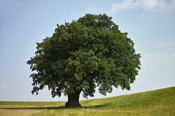 Baum Das erste Date