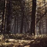 Black Hills Forest 16