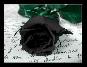 Die schwarze Rose | ScaryWiki | Fandom