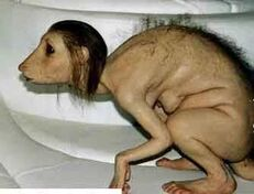 Rattenmädchen