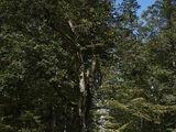 Die weiße Frau vom Ebersberger Forst
