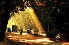 Aarey Road