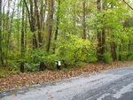 Black Hills Forest 12