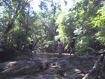 Black Hills Forest 9