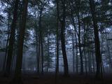 Der Hexenwald