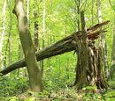 Der Mörder im Wald