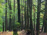 Im finsteren Wald