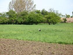 Feld bei Kleptow