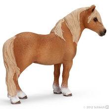 Dartmoor Stallion