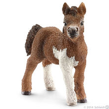 Shetland Foal-0