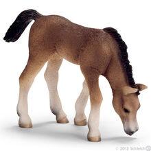 Arabian Foal, grazing