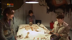 Willi Skelet 508