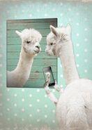 Llama mirror selfie
