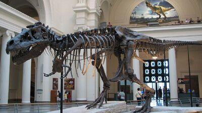 Tyrannosaurus 'Sue' Skeleton