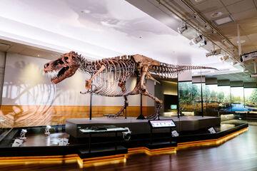 Sue the T.Rex