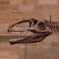 """Gigantosaurus (""""giant lizard"""")"""