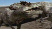 Tyrannosaurus Fight
