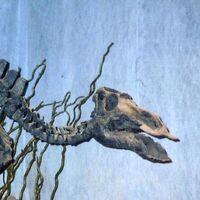 "Maiasaura (""Good Mother Lizard"")"