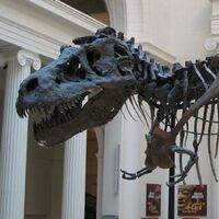 "Tyrannosaurus (""Tyrant Lizard King"")"