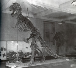 AMNH 5027 in 1907