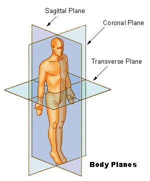 Body-planes-01-goog