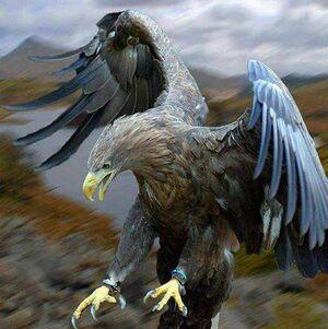 Eagle-01-goog