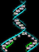 DNA-replication-02-goog
