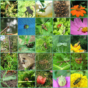 Insects-goog