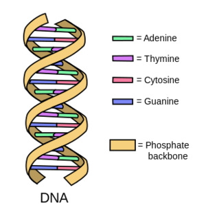 Nucleobases-02-goog