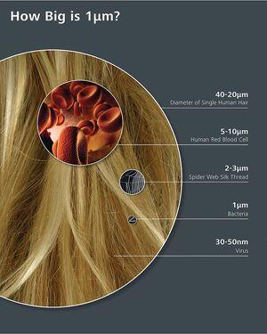 Magnitudes-Hair-Virus-goog