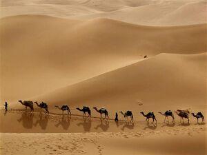 Desert-03-goog