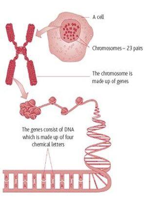 Genetics-Gen-03-goog