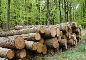 Wood-02-goog