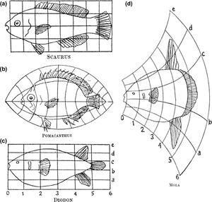 Bio-topology-02-goog