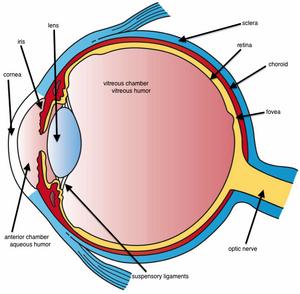 Eye-02-goog
