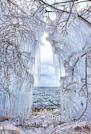 Frozen-Trees-01-goog