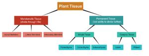 Tissues-Plant-01-goog