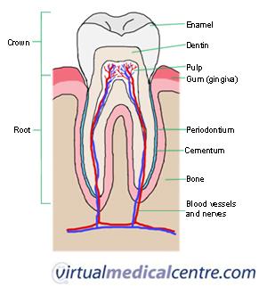 Tooth-goog