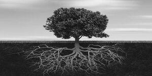 Tree-Roots-01-goog