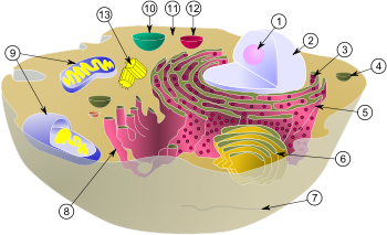 BiologicalCell